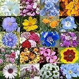 """3,000 Seeds, Wildflower Mixture """"Low Growing"""" (20 Species) Seeds By Seed Needs"""