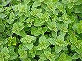 SOIL ME Oregano Herb Seeds