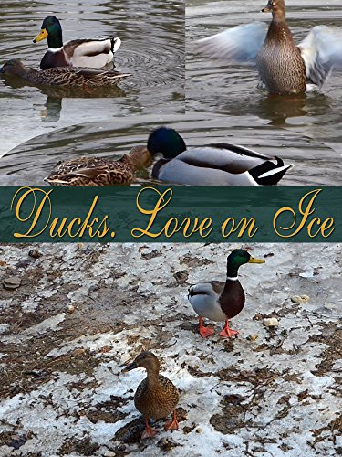 Ducks. Love on Ice on Amazon Prime Instant Video UK