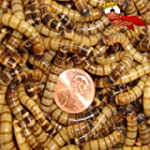 500 Live Superworms Organically Grown...