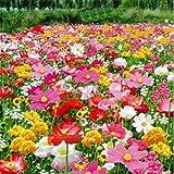 200粒/袋 多年生の野生の花のミックスの種