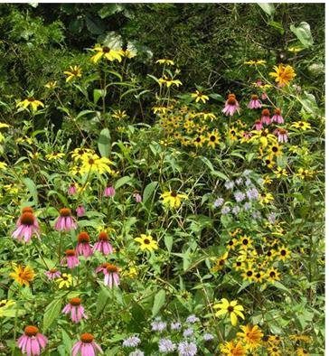 Woodland Edge/Part Shade Mix (Mix 134), 1250 Certified Pure Live Seed, True Native Seed