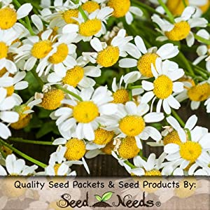 250 Seeds, OG Feverfew Herb (Tanacetum parthenium) Seeds By Seed Needs