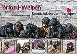 Briard-Welpen - Knuddelbären zum Verlieben (Wandkalender 2017 DIN A4 quer): Ein fotografischer Blick in die Kinderstube von süßen Briardwelpen (Monatskalender, 14 Seiten) (CALVENDO Tiere)
