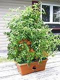 Garden Patch Grow Box Terra Cotta
