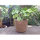 The Garden Store Coir Pot 8 Inch Set Of 2