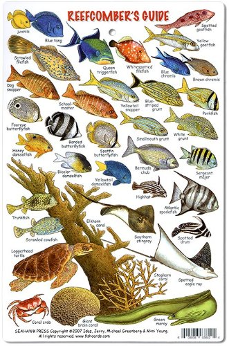 Reefcomber'S Guide Id Card ~ Fishes, Corals & Invertebrates ~ Florida, Bahamas & Caribbean