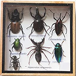 REAL WHIP SCORPION AND MIXS INSECT TAXIDERMY SET IN BOXES DISPLAY FOR COLLECTIBLES