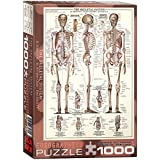 Eurographics Skeletal System (Chart)-1000 Piece Puzzle