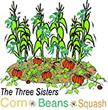 3 Sisters Garden Collection By Stonysoil Seed Company