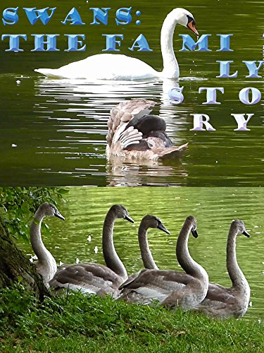 Swans: The family story on Amazon Prime Instant Video UK