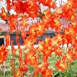 RONGXINUK 7.54ft Artificial Ivy Red Leaf Garland Plant Vine Fake Foliage Flower Home Decor