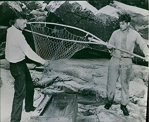 vintage-photo-of-a-fish-trapped-in-net-men-trying-to-bring-it-out