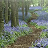 English Heritage Path Through Bluebells Greetings Card