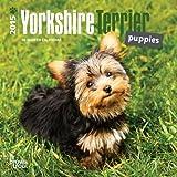 Yorkshire Terrier Puppies 2015 Calendar