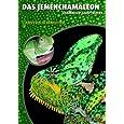 Das Jemenchamäleon: Chamaeleo calyptratus