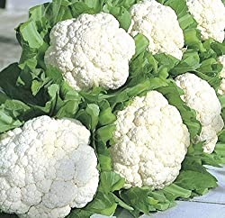 CAULIFLOWER SEEDS - 200 NOS (VARIETY EARLY)
