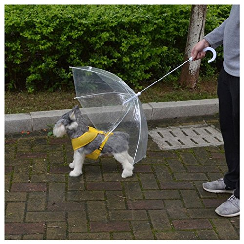 ombrello-con-guinzagli-per-cane-cani-umbrella-trasparente
