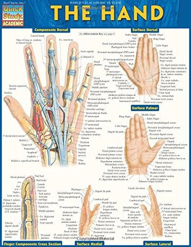 The Hand (Quick Study Academic)
