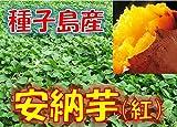 新芋(2016年産) 訳あり 種子島産 安納芋 「安納紅」 サイズ混合 1箱:約10kg入り  安納いも