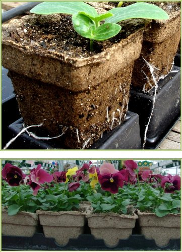 Biodegradable-Transplantable-Eco-Friendly