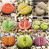 Free Shipping 100pcs Lithops Aizoaceae MIX~living stones colorful faces Bonsai Succulent Plant Seeds