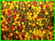 10mm Boilies Mega Mix - Tutti / Pineapple / Scopex / Anchovy etc