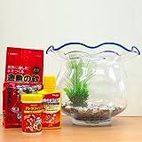 金魚セット 鉢タイプ