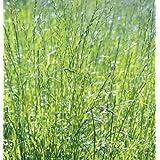 David's Garden Seeds Cover Crop Rye Grass D988GBN1 (Green) 1 Pound Package