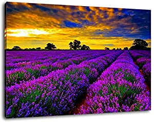lavendel im wald format 80x60 cm bild auf leinwand bespannt riesige xxl bilder komplett und. Black Bedroom Furniture Sets. Home Design Ideas