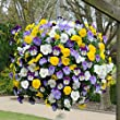 Trailing Hardy Pansy 'Cool Wave' - pack of 18 jumbo plugs