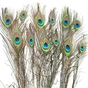 SODIAL(R) Confezione da 12 piume di pavone Aprox 10&& a 12&& pollici Naturale pavone piume occhie  Giochi e giocattoli recensioni