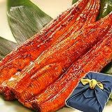 鰻(うなぎ)の特大長蒲焼きセット 風呂敷包み (2本セット 紺色風呂敷) ランキングお取り寄せ