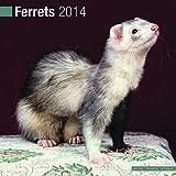 Avonside Publishing Ferrets 2014 (Calendar 2014)