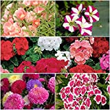 Winter flower seeds 5 pkts by Seedscare India (Godetia, Petunia, Geranium, Aster, Dianthus- 400+ seeds combo)