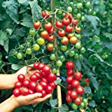 Suttons Seeds 150510 F1 Sweet Million Tomato Seed