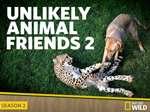 Unlikely Animal Friends Season 2