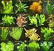150 Wasserpflanzen XXL Set, D�nger, Aufbereiter