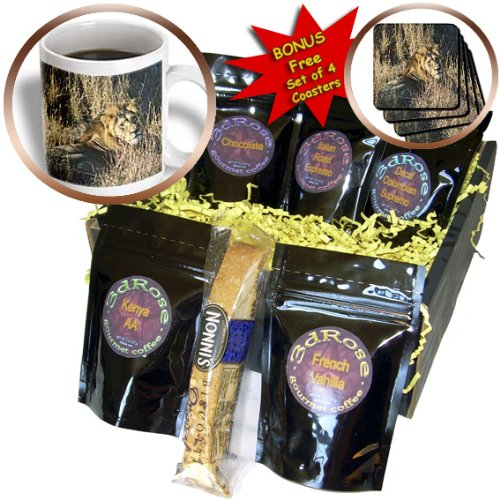 Cgb_26828_1 Angelique Cajam Big Cat Safari - Lion King In The Grass - Coffee Gift Baskets - Coffee Gift Basket