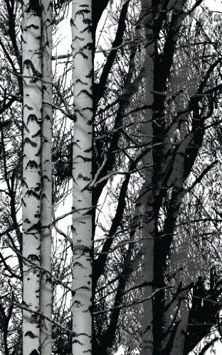 d-c-fix® Static Cling Premium Window Film (no adhesive) Wood Trees 67.5cm x 1.5m 334-8028