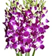 Fresh Flowers - Purple Dendrobium Orchids from Just Orchids