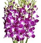 Fresh Orchids- 10 Long Stemmed Purple...