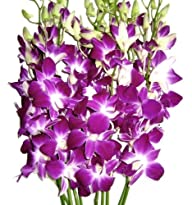 Just Orchids – Premium Long Stem Purp…