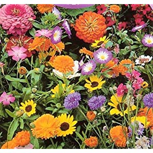 Hirts Wildflower Seeds - 1000+ Low Growing - Our Wildflower mixes are specially formulated to provide waves of beautiful color and low-maintenance beauty.