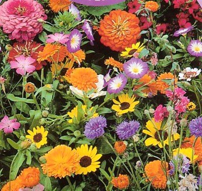 Buy Wildflower Seeds-1/4 lb. Low Growing -Covers 75 sq.ft. – FREE SHIPPING ON ADDITIONAL HIRTS SEEDS