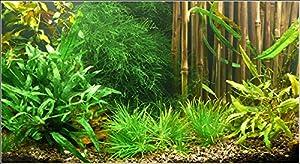 """Zoomeister - Wasser-Pflanzen - Set """"Asien"""" Bis 60L"""