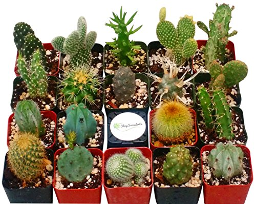 Shop Succulents Cactus Succulent (Collection of 9)