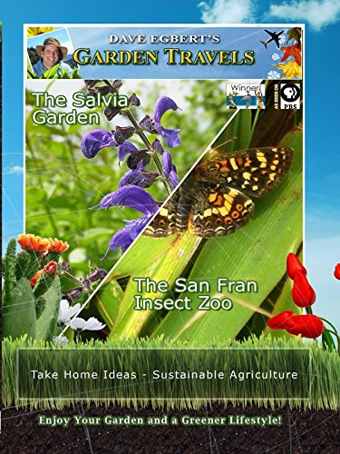 Garden Travels - The Salvia Garden - The San Fran Insect Zoo