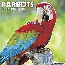 Parrots 2016 Calendar