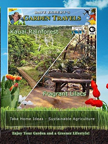 Garden Travels - Kauai Rainforest - Fragrant Lilacs